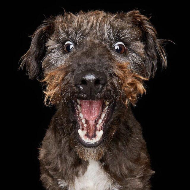 Dog screams