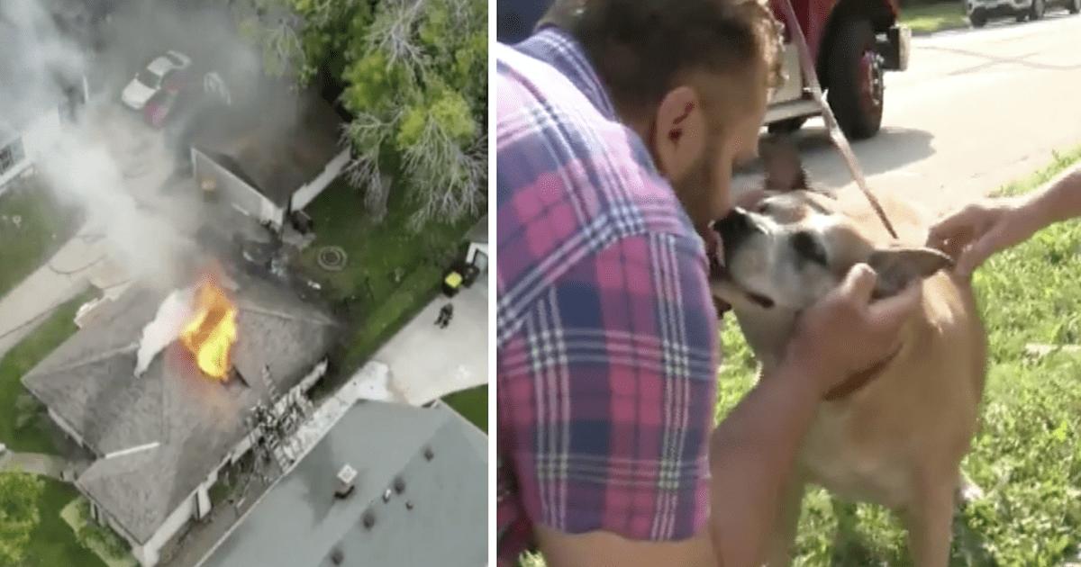 Dog fire rescue