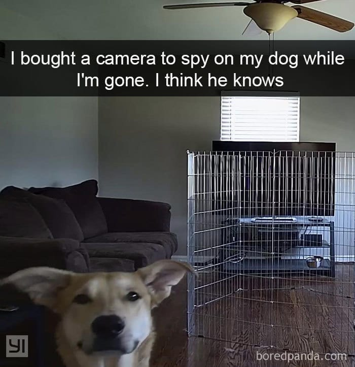 dog snapchat photo