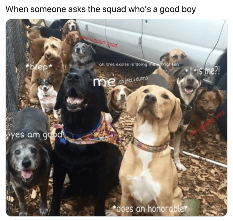 Lots of goos boys