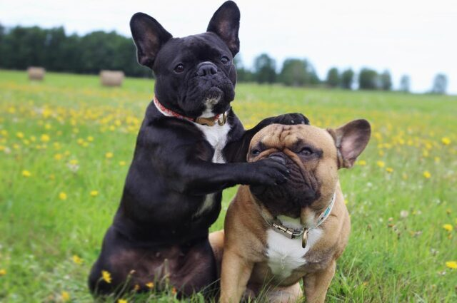 Dog politician