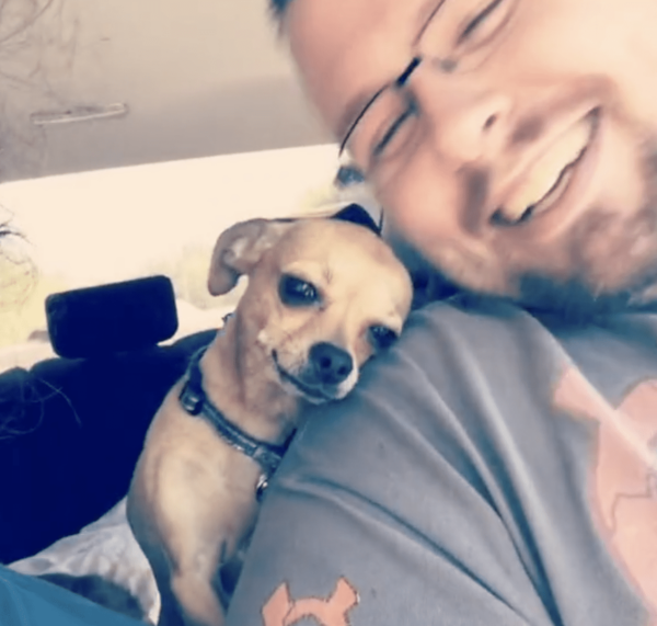 Cuddly Chihuahua with her human
