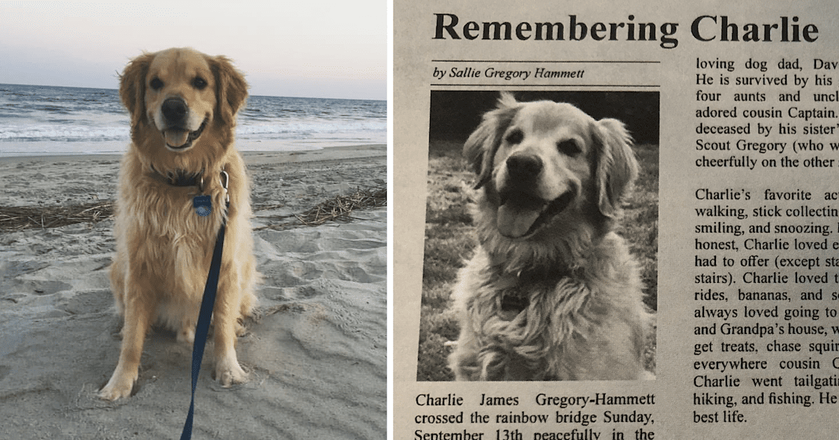 Golden Retriever Obituary