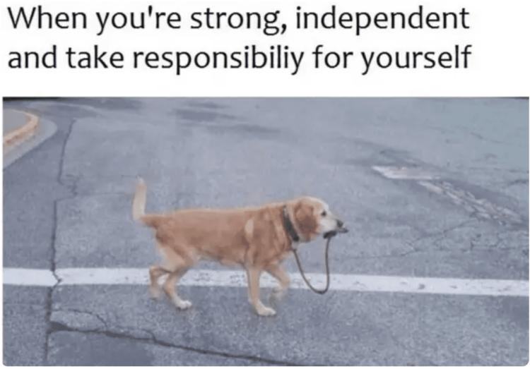 Responsible dog