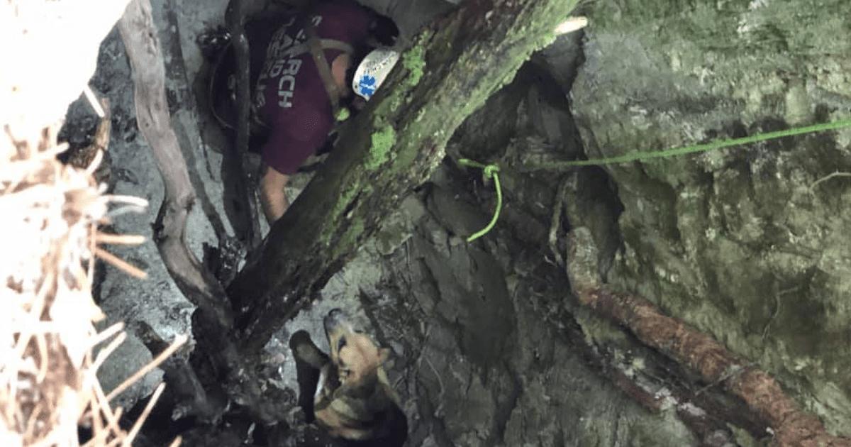 Dog in sinkhole