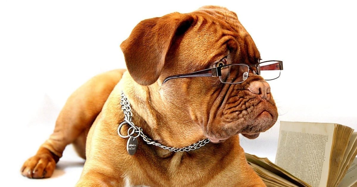 intelligent dog breeds