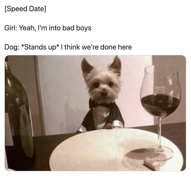 Dog Speed Date