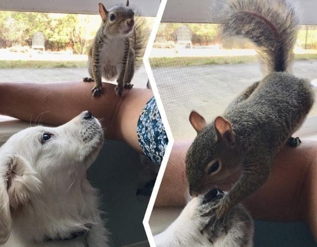 squirrel and dog