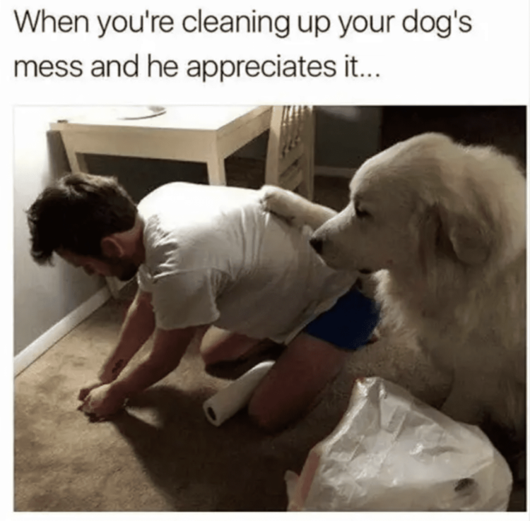 Supportive dog