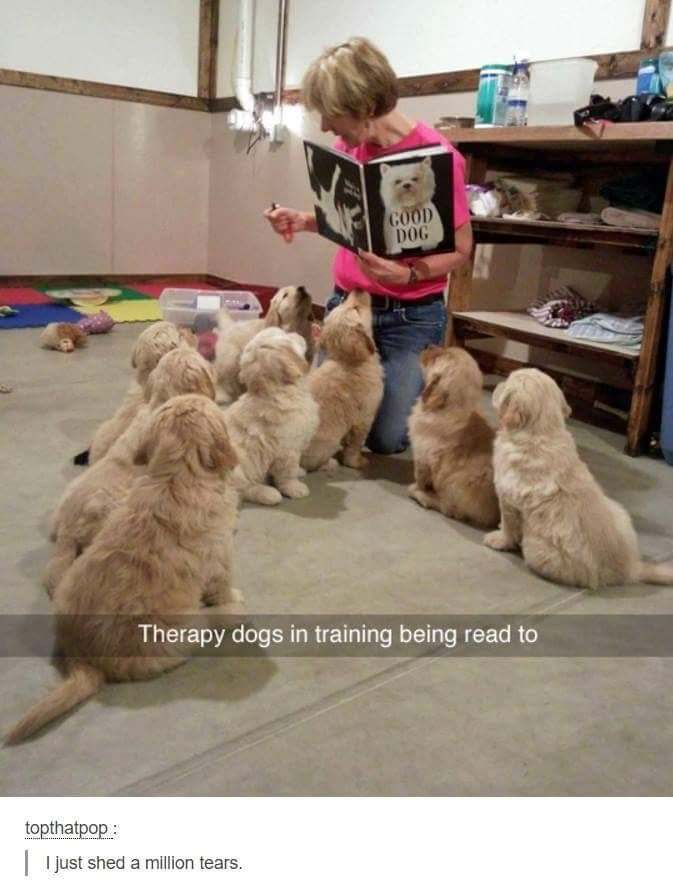 Reading therapy dogs
