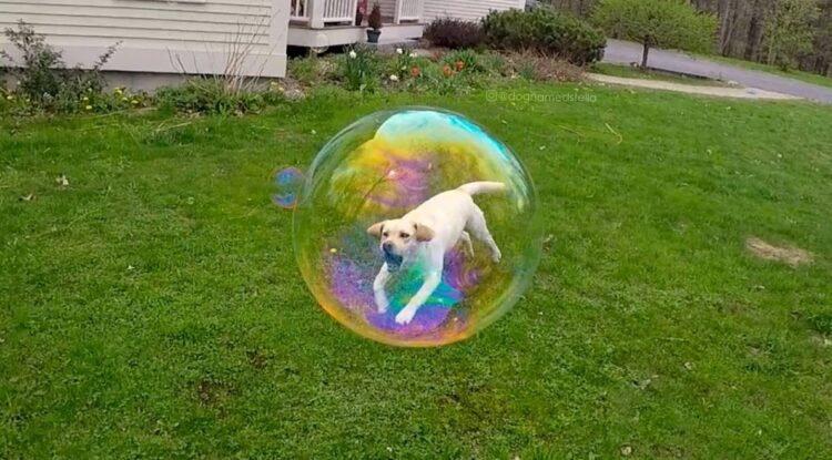 Dog trapped in bubble