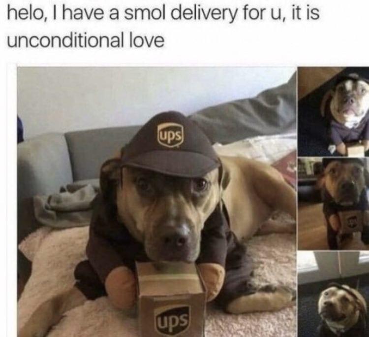 UPS dog