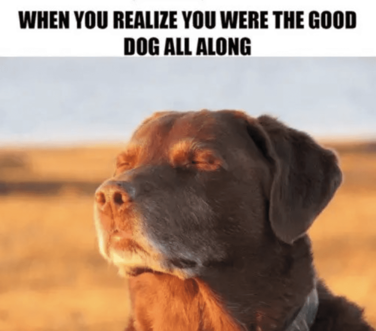 You're the good dog