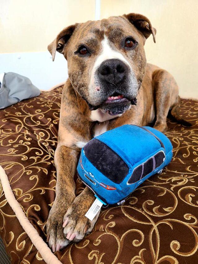Adoptable Shelter Dog