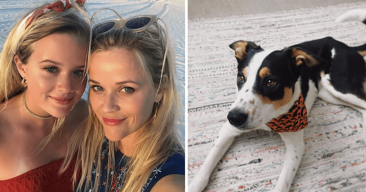 Reese Witherspoon and Ava Phillippe Dog