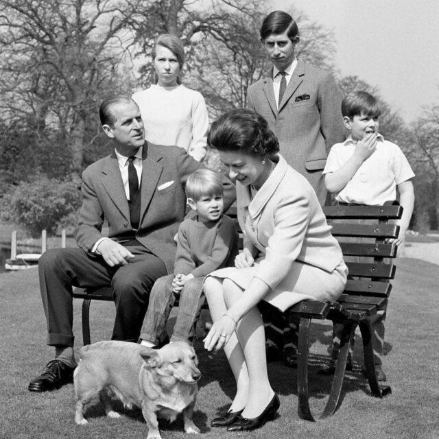 Corgi family photo
