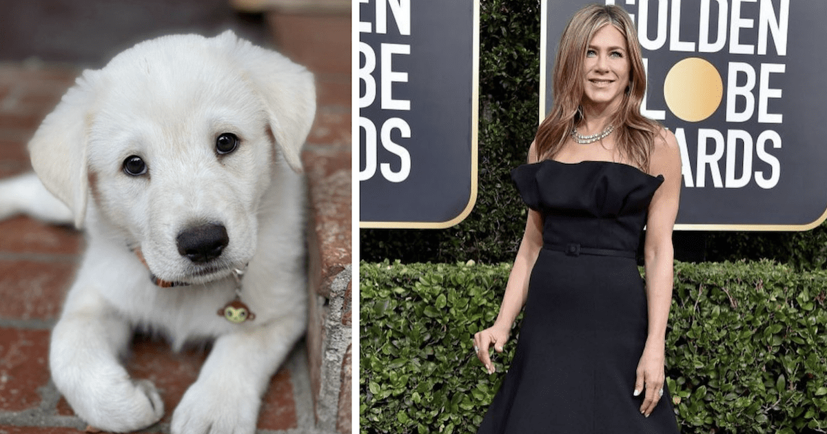 Jennifer Aniston's Puppy