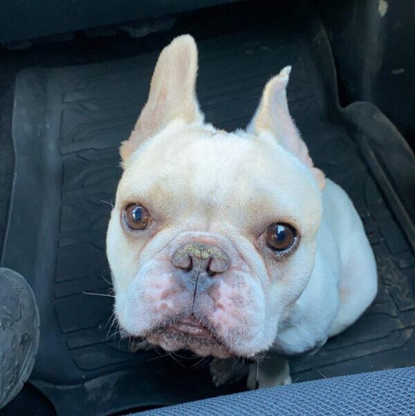 Popeye in car