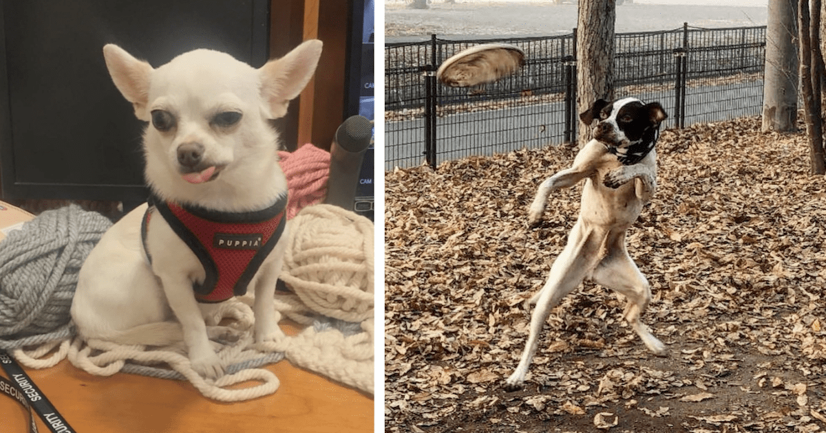 Unflattering dogs