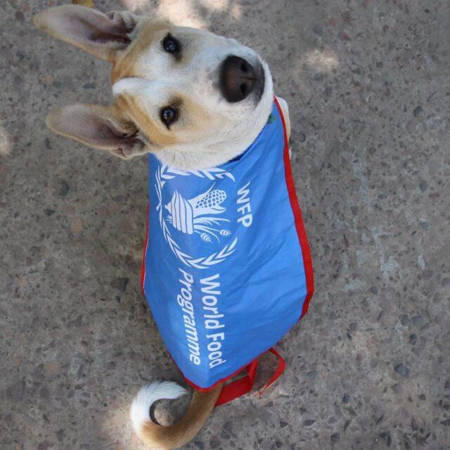 World Food Programme Dog