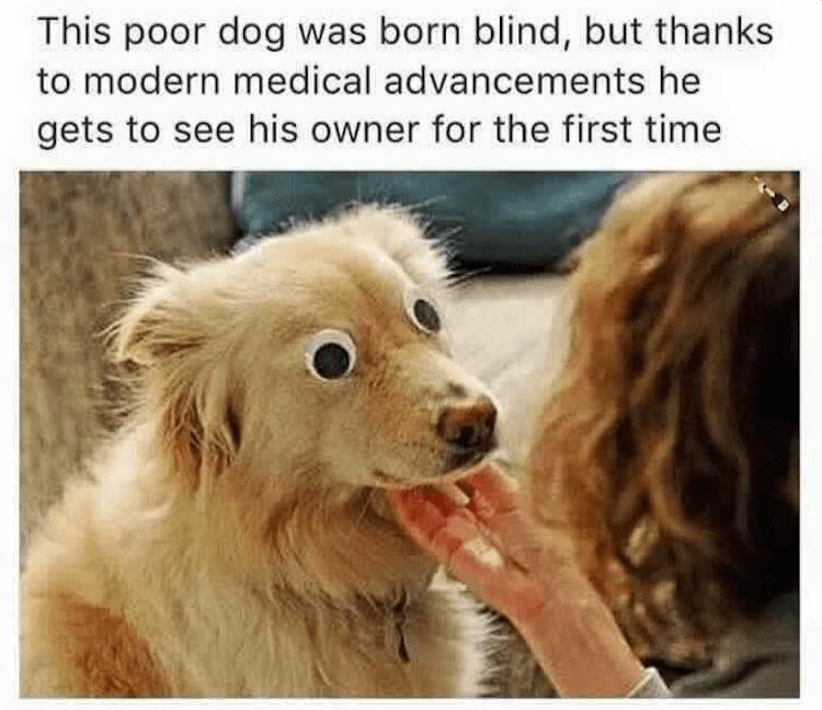 Blind dog sees