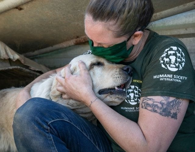 dog meat trade rescue