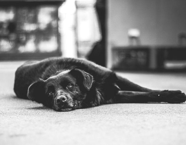 dog personality