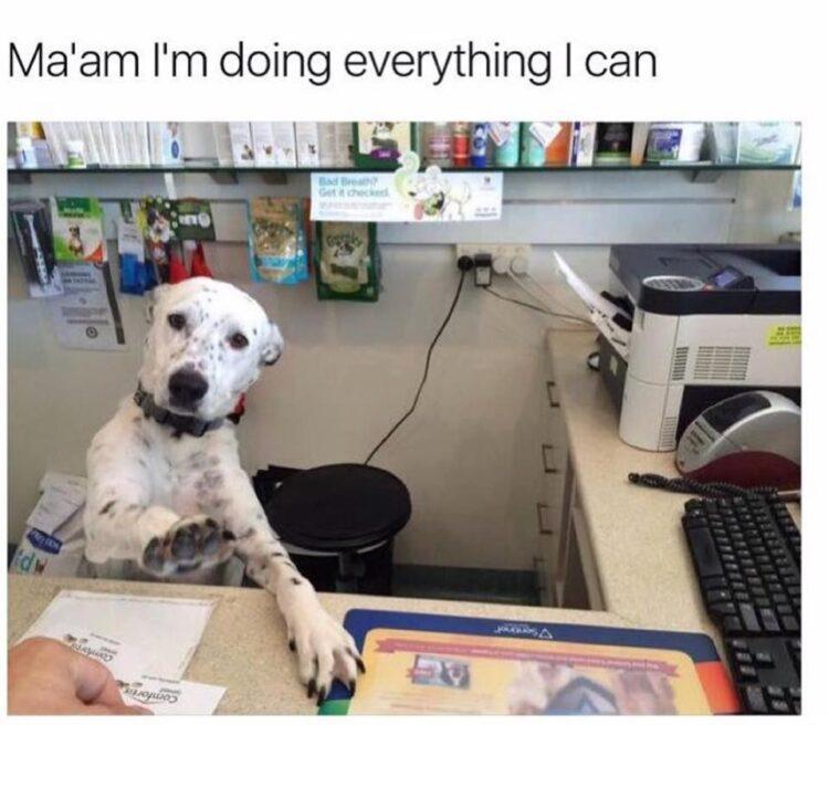 Dog with job