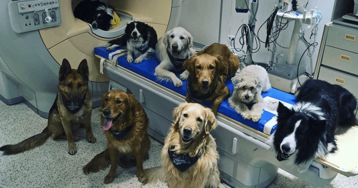 Dog MRI study