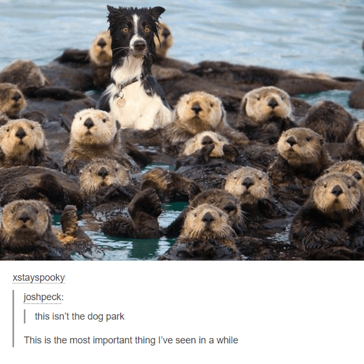Dog and otters