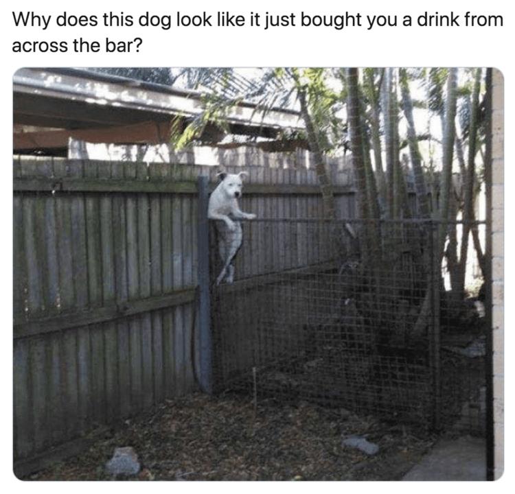 Dog pole