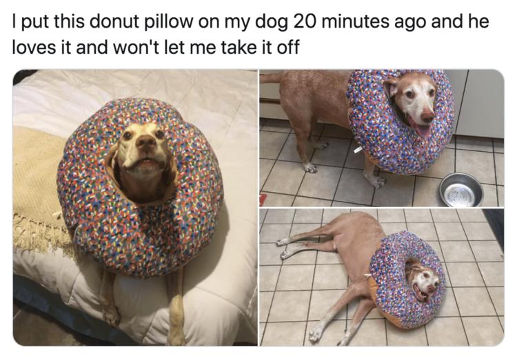 Dog donut pillow