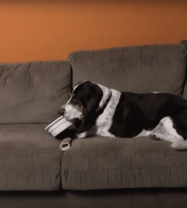 Dog eats on the couch