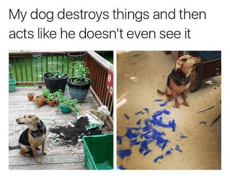 Dog denial