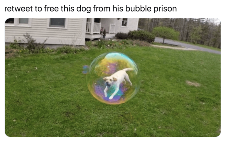 Dog in bubble