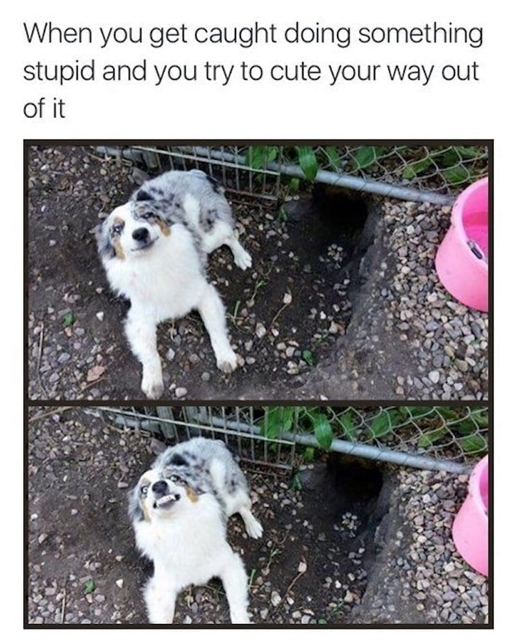 Dog in trouble
