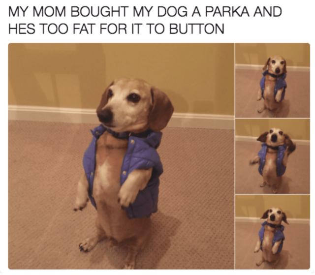 Dog Parka