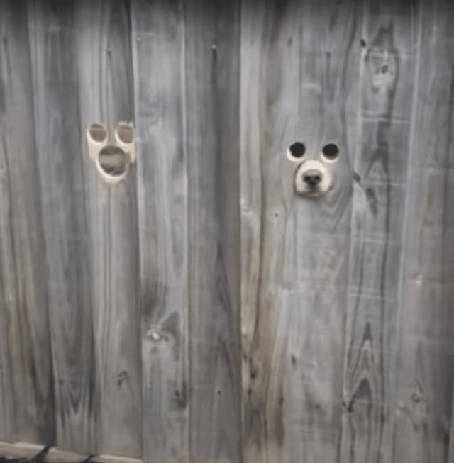 Dog peeking out