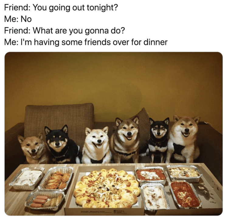 Dog pizza party