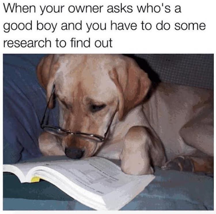 Good boy resarch