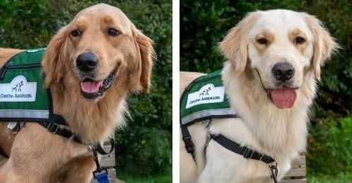 hospital service dogs