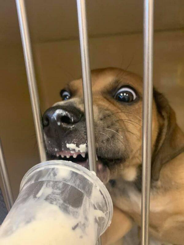 Hungry shelter dog