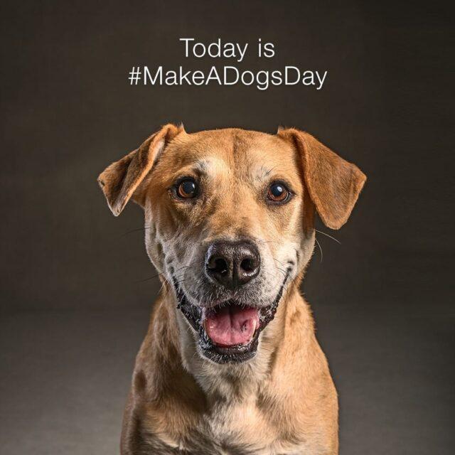 Make a Dog's Day