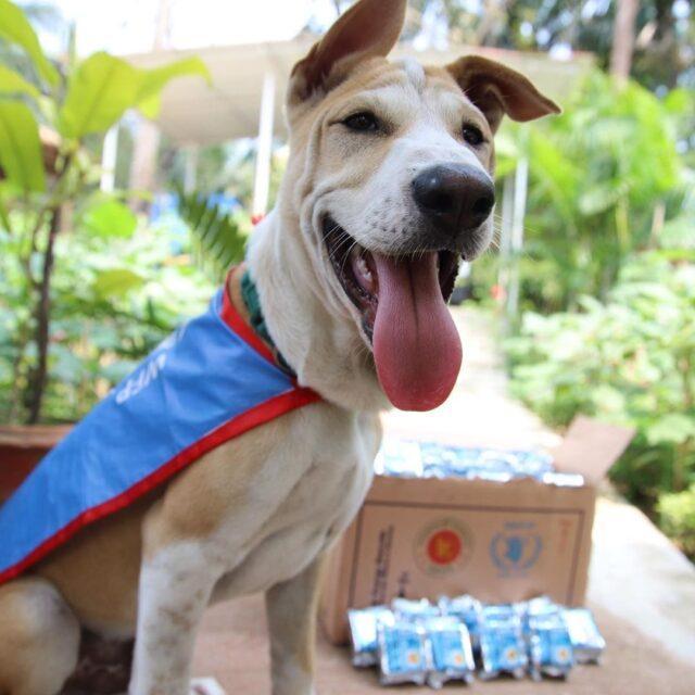 Nobel Peace Prize Dog