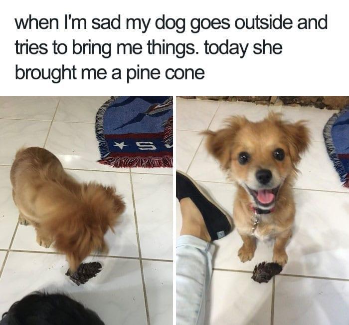 Pine cone dog
