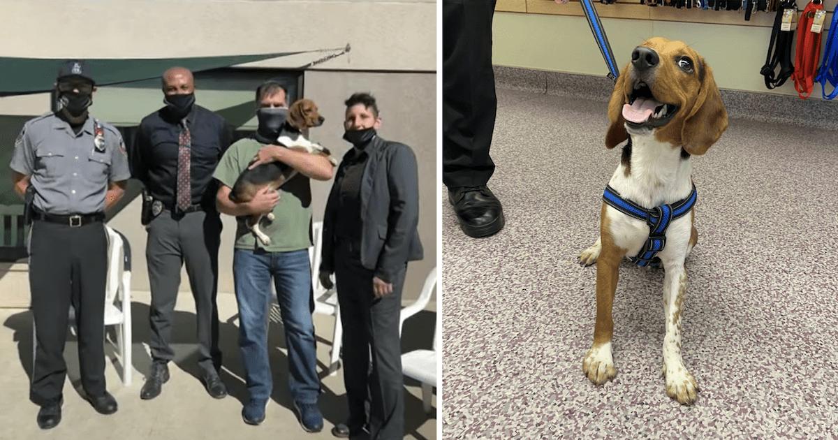 Police Beagle