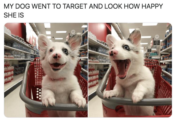 Puppy Target Run