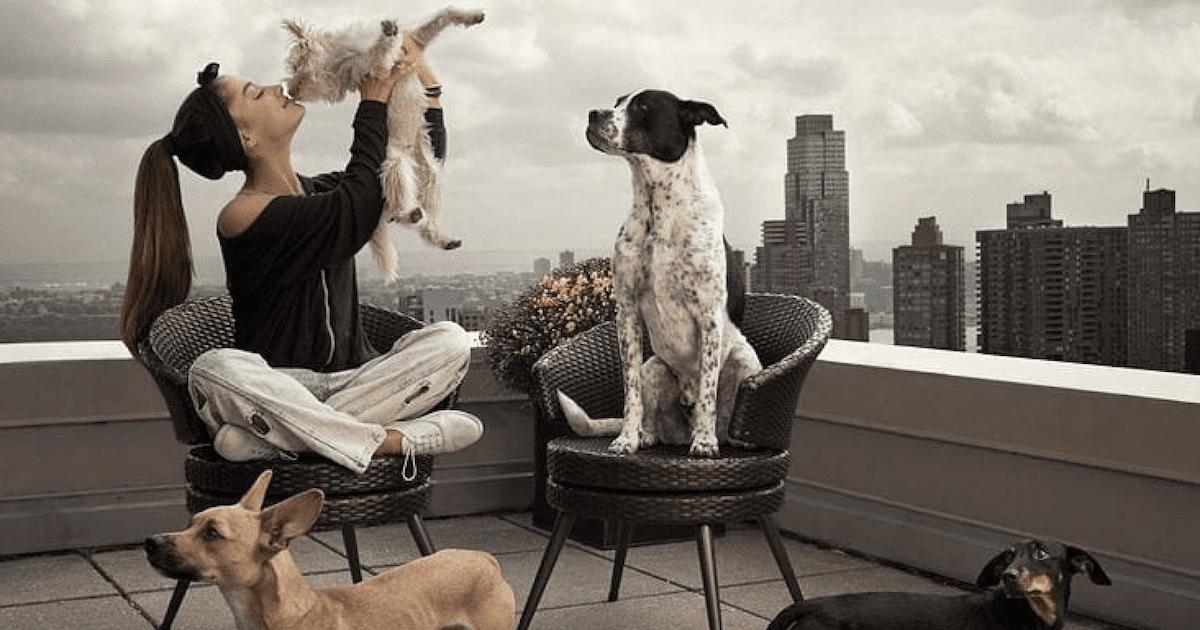 Ariana Grande Dogs