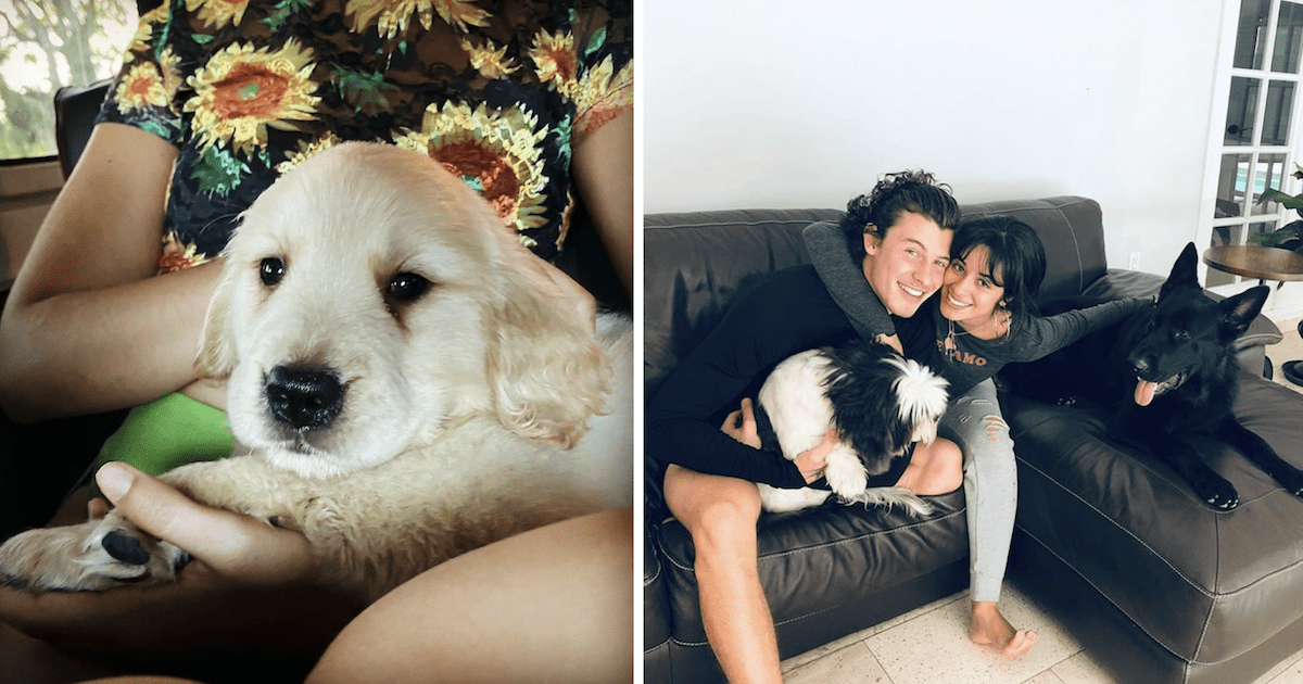 Cabello and Mendes Dog