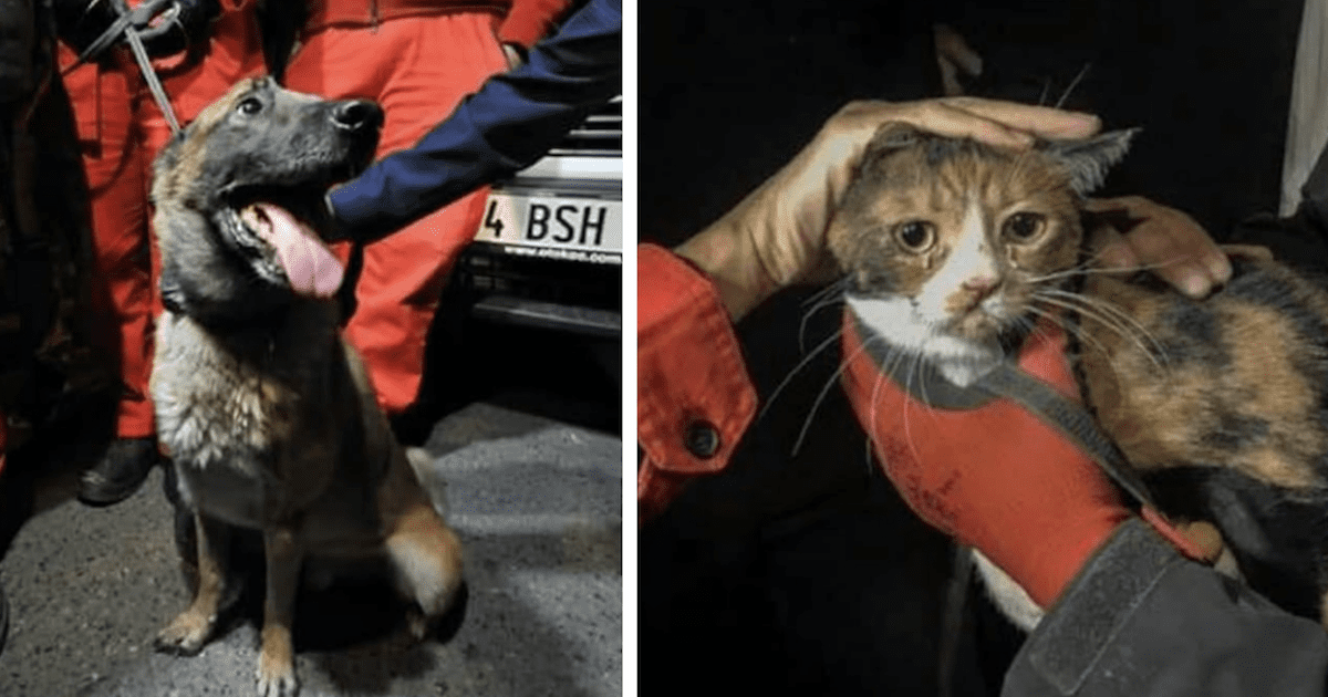 Cat Rescued from Earthquake